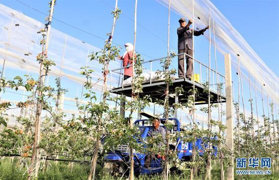 5月9日,在甘肃省平凉市静宁县城川镇一苹果有机示范园里,工人在为果园搭建防雹网。新华社发(王毅 摄)