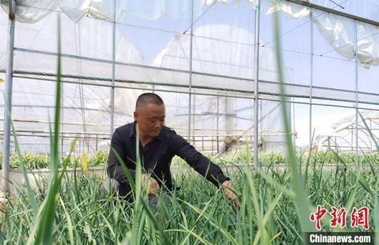 5月,甘肃省定西市临洮县蔬菜大棚种植户龙建华通过信用贷款的方式,周转资金解决燃眉之急。 张婧 摄