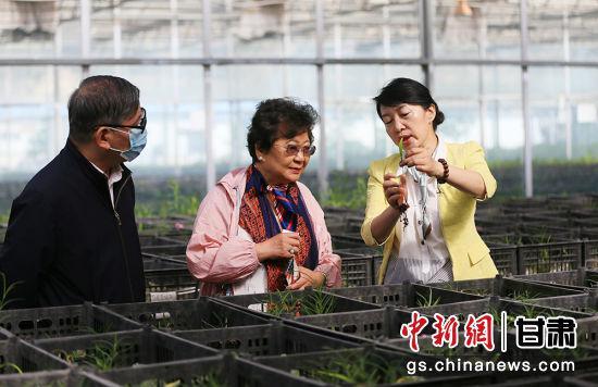 图为吕斐斌向华文媒体代表们介绍兰州百合。