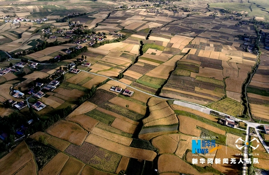 立秋后,地处高海拔地区的甘肃省张掖市民乐县丰乐镇,一块块金黄麦田错落有致地镶嵌在大地上,形成美丽的几何图案。新华网发(陈礼 摄)