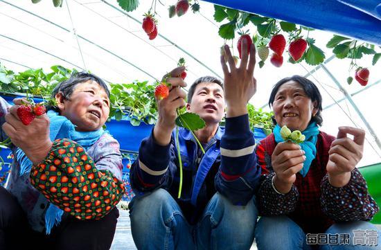 农业技术员正在给种植户讲解无土栽培草莓如何疏果。