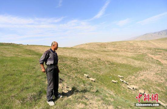 天气放晴后,朱克铭在山上放养。 高展 摄