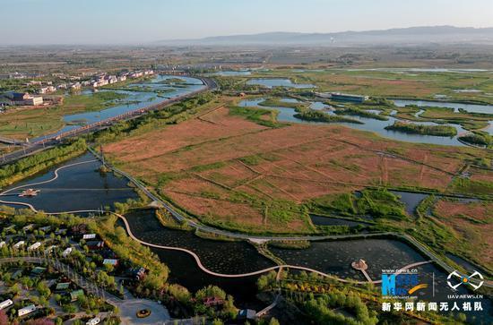 """甘肃省张掖国家湿地公园被称为""""城市之肺""""。新华网发(杨永伟 摄)"""