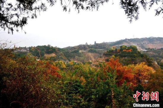 图为兰州市南北两山绿化林一隅的秋景,色彩斑斓。(资料图) 兰州市南北两山环境绿化工程指挥部供图