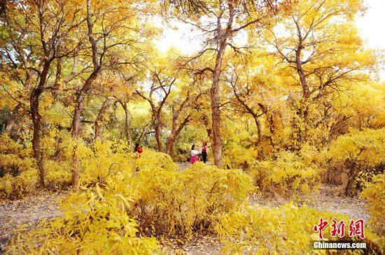 2016年,甘肃酒泉境内的胡杨林色彩绚丽。 中新社记者 杨艳敏 摄
