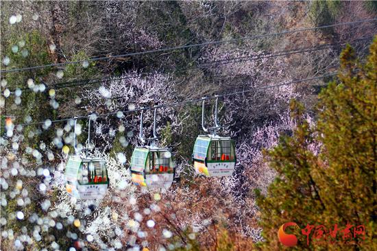 兰州白塔山,一片花海中缆车悠悠经过,幽静山谷中俯瞰花海春光正好。
