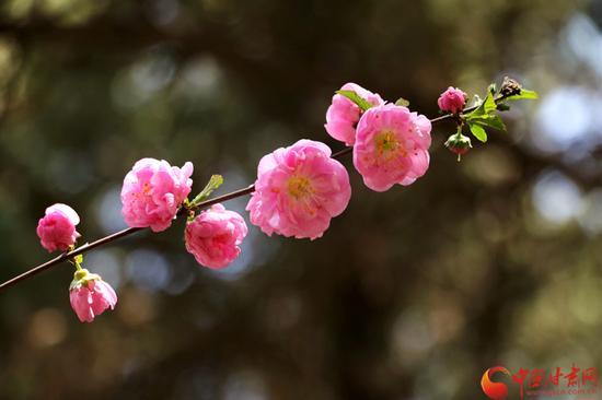 每一朵花仿佛都承载着一个个沉甸甸的梦想,虽艰难,但终会盛开。