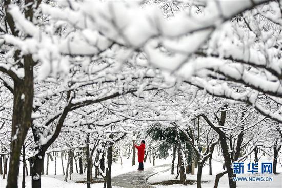 11月5日,市民在雪中的崆峒区南山生态公园拍照留念。 新华社发(杨昕 摄)