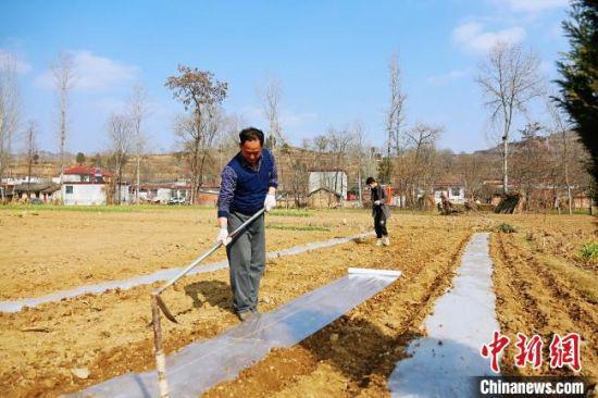 图为甘肃徽县村民在空旷的田间覆地膜。西北干旱且温差大,地膜能提高土壤温度,保持土壤水分,还可防止害虫侵袭作物。 高琼 摄