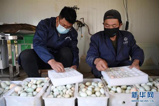 王磊(左)和同伴一起将土鸡蛋包装好准备发货(4月23日摄)。新华社记者 陈斌 摄