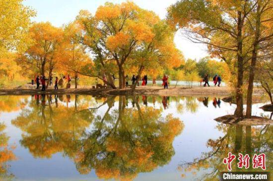 金秋十月,甘肃省酒泉市沙漠胡杨林景区一片金黄,宛如一幅巨型油彩画。