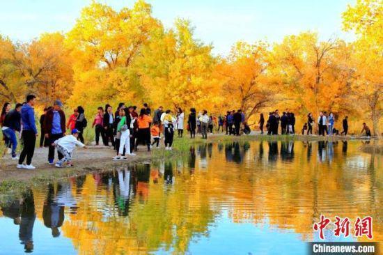 正值最佳观赏期的大片胡杨林在一池碧水的掩映下,闪烁着耀眼的金光。