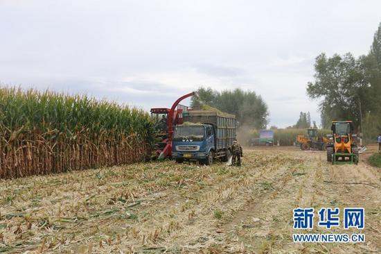 高标准农田中的机械化作业。 受访者供图