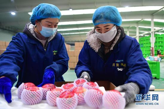 工作人员在甘肃省庆阳市宁县庆阳海越冷链基地分拣苹果(12月15日摄)。新华社记者 陈斌 摄
