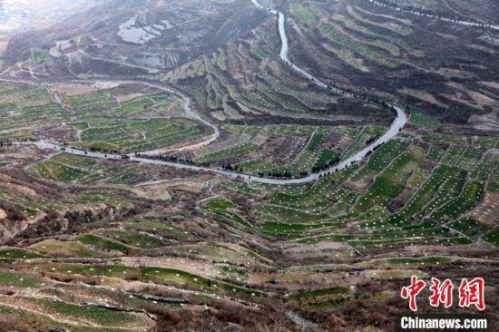 图为陇南市武都区新一轮退耕还林核桃基地建设。(资料图) 陇南市林业和草原局供图