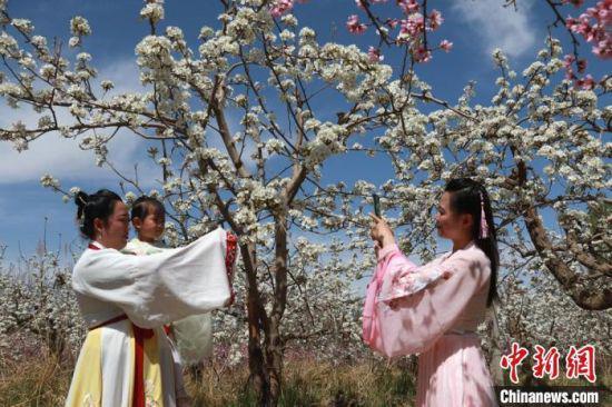 图为乡村旅游特色和莫高人家梨花园的魅力展示。 张晓亮 摄