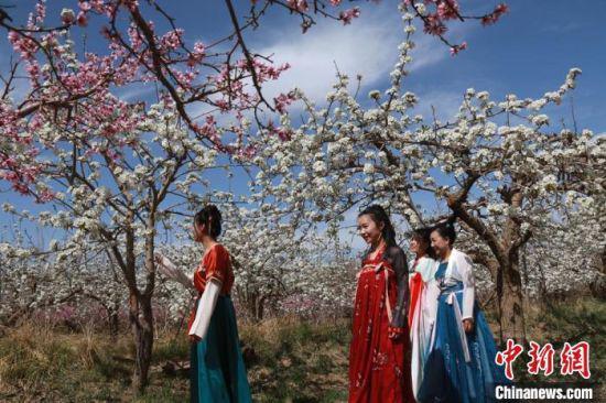 图为游人在莫高镇泾桥村梨园中游玩。 张晓亮 摄