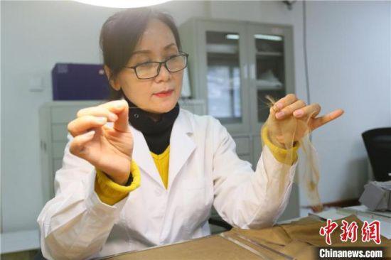 据赵喜梅介绍,修复文物纺织品所用的绉丝纱比头发丝还细。 高展 摄