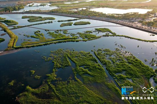 甘肃省张掖国家湿地公园初夏风光。新华网发 (杨永伟 摄)