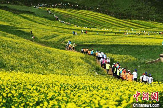 2020年7月,登山运动爱好者穿越祁连山下的甘肃民乐油菜花海。(资料图) 杨艳敏 摄