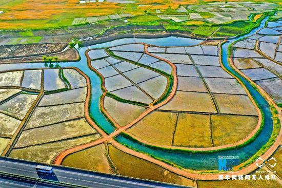 5月28日清晨,甘肃省张掖市甘州区乌江镇元丰村的稻田在朝阳沐浴下,如一幅美丽的画卷。新华网发 (王将 摄)