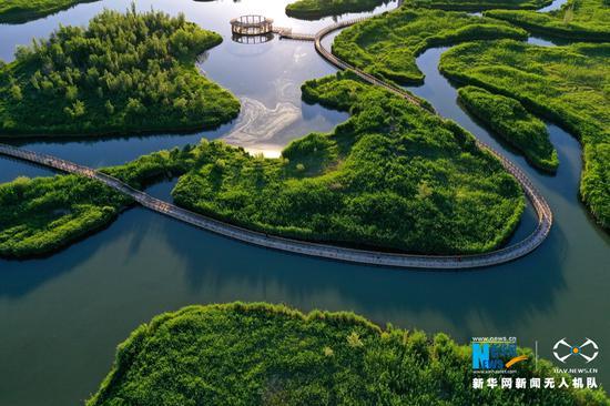 张掖国家湿地公园草木翠绿。新华网发 (吴学珍 摄)