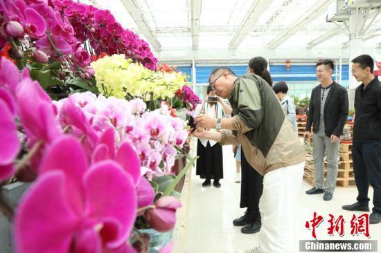 华媒代表赏花。(魏建军 摄)
