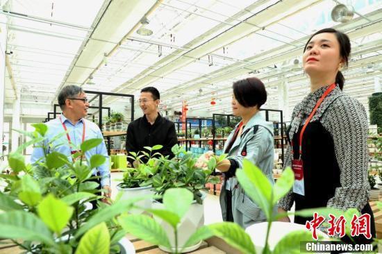 华媒代表探讨兰州新区花经济。