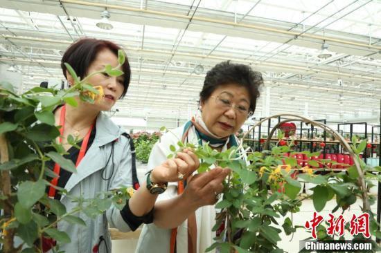 华媒代表研究花种。