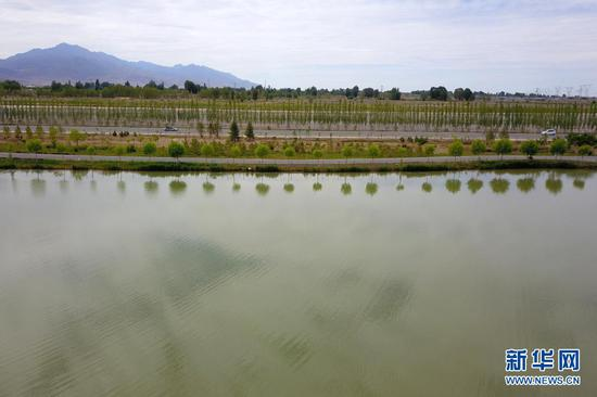 这是6月16日在临泽县拍摄的水系连通项目中打通的梨园河东河水系(无人机照片)。新华社记者 范培珅 摄