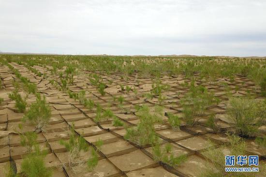 这是6月16日拍摄的临泽县北部干旱荒漠沙化土地封禁保护区(无人机照片)。新华社记者 范培珅 摄