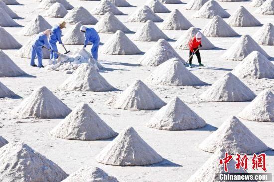 人们将盐池中已晒好的原盐铲起并拉运集中,到处是一派繁忙的景象。王将 摄