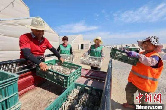 图为周边村民在西岔园区秦东农投公司采摘食用菌。(资料图) 晏博 摄
