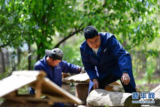 王磊(右)在整理养殖中华蜂的蜂箱(4月23日摄)。新华社记者 陈斌 摄