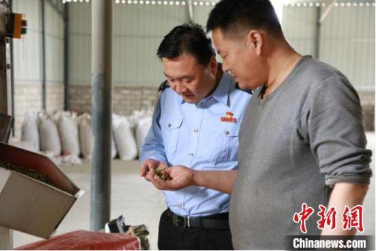 金秋时节,丰收之际,甘肃省酒泉市金塔县牧草加工合作社工人向税务干部介绍苜蓿草混合饲料颗粒最后的成品。
