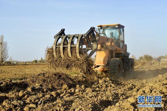 近年来,高台县把中药材产业作为调整农业产业结构、增加农民收入的重点产业进行培育,中药材种植已成为当地农民增收致富的特色产业。新华网发(郑耀德 摄)