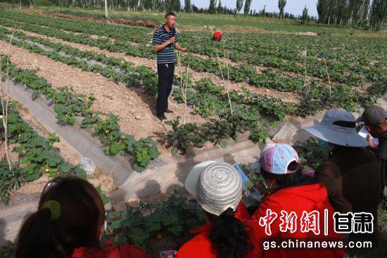 当前,正值蜜瓜开花坐果的关键时期。敦煌市组织农业技术人员深入乡村田间地头开展农业技术培训。