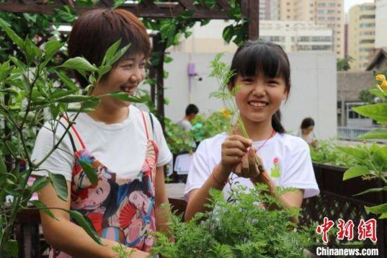 """7月中旬,兰州城关区一社区版""""都市农场""""迎来首个收成日。萌娃和父母一起采摘亲手种植的蔬菜。 闫姣 摄"""