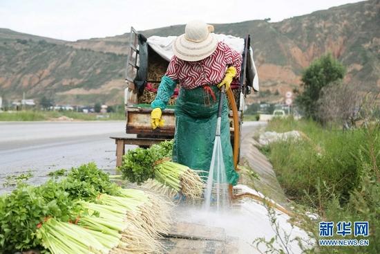 7月27日,甘肃省定西市安定区凤翔镇中川村村民在清洗芹菜。新华社发(王克贤 摄)