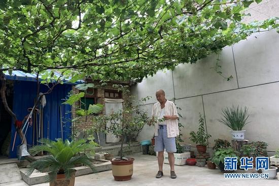 胡家大庄村的一户小院里,葡萄已经结果。新华社记者 张玉洁 摄