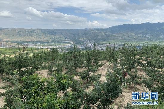 胡家大庄村的一片果园。新华社记者 张玉洁 摄