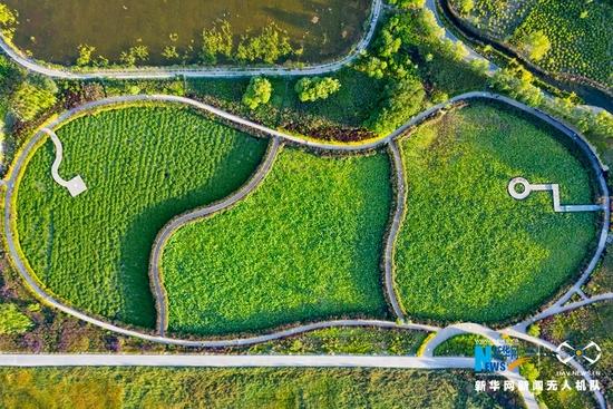 """这是近日航拍的甘肃省张掖国家湿地公园。夏日,在夕阳的映照下,碧绿的湿地笼上了一层""""金纱"""",宛如一幅秀丽的风景画。新华网发(成林 摄)"""
