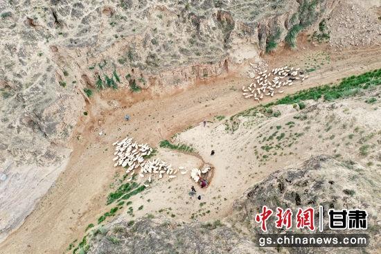 干涸的沟道一眼苦水井排队饮羊。李文 摄