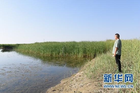 8月12日,魏智华在青土湖进行巡查。(新华社记者 崔翰超 摄)