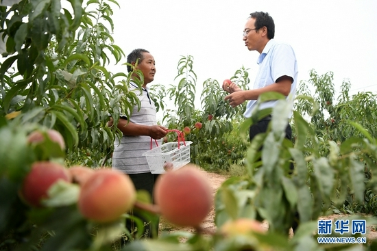 8月18日,方志利(右)和村民交流桃子采摘情况。新华社记者 陈斌 摄
