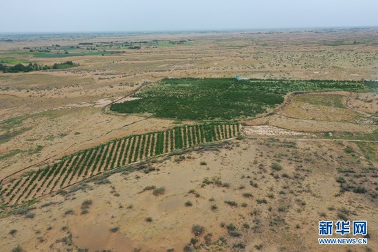 这是方志利经营的桃园(8月18日摄,无人机照片)。新华社记者 杜哲宇 摄