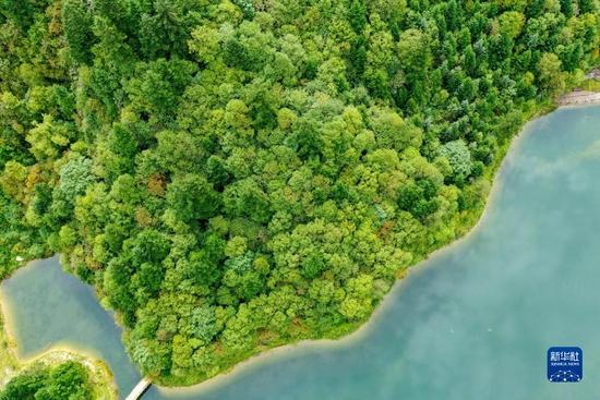这是8月26日拍摄的官鹅沟国家森林公园内森林景观(无人机照片)。新华社记者 郎兵兵 摄