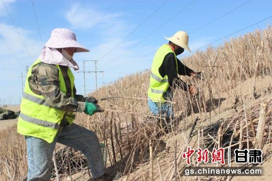 图为施工人员进行柴草方格试验段铺筑。