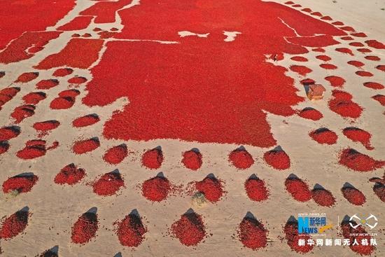 这是近日在甘肃省张掖市高台县合黎镇八坝村航拍的辣椒晒场。新华网发 (郑耀德 摄)