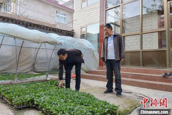 图为梁培智(左一)和村民唠嗑今年蔬菜长势。 刘玉桃 摄